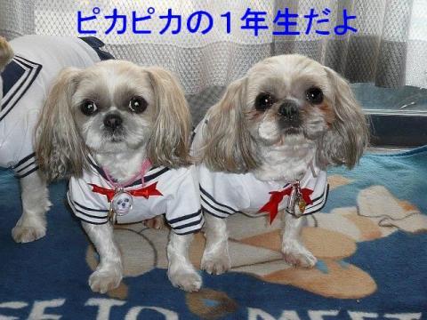 lovemint_20090407_1