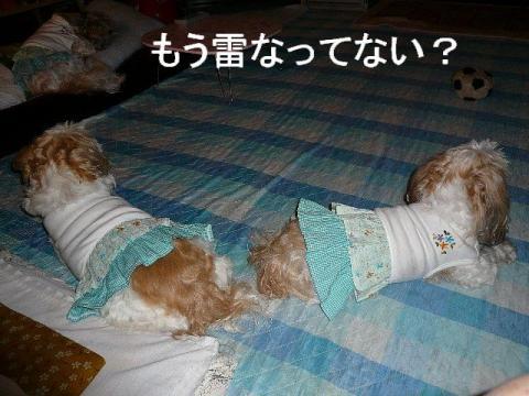 bibimint_20090601_3