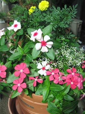 その後の花