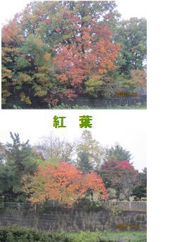 kouyou_20101101181026.jpg