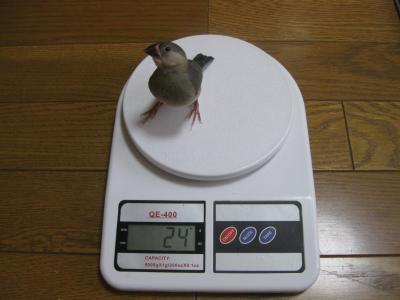 体重くろた