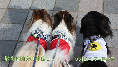 s-saaaenosuheikuzozozo.jpg