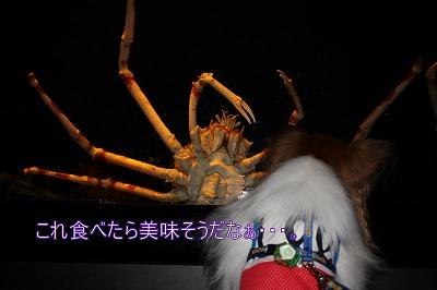 s-takaashigani.jpg