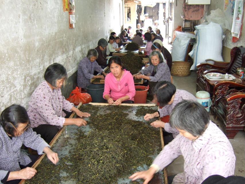204秀篆鎮陳龍村茶加工場