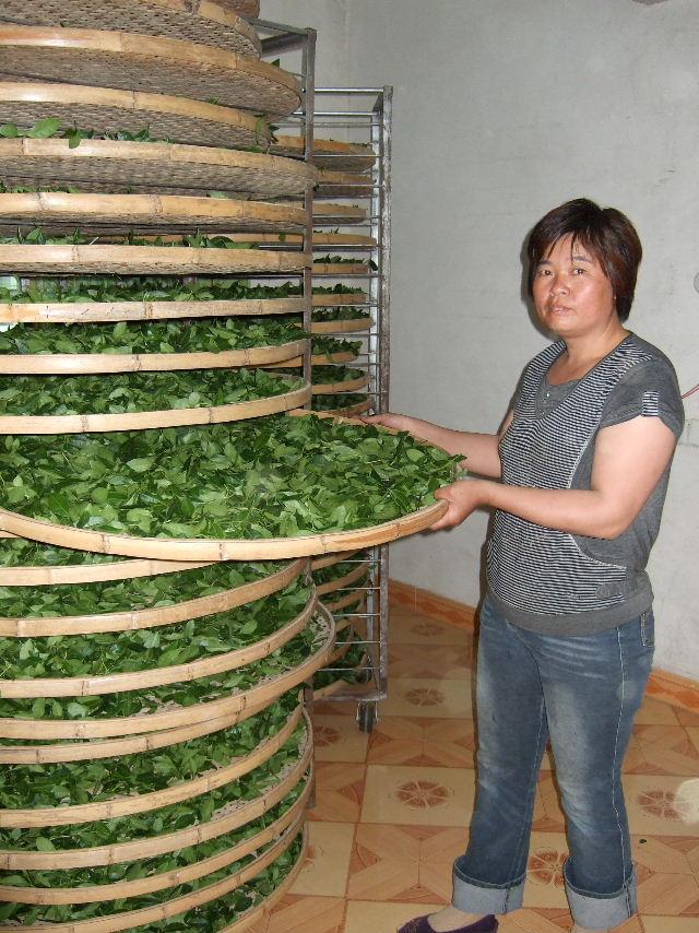 301茶加工場