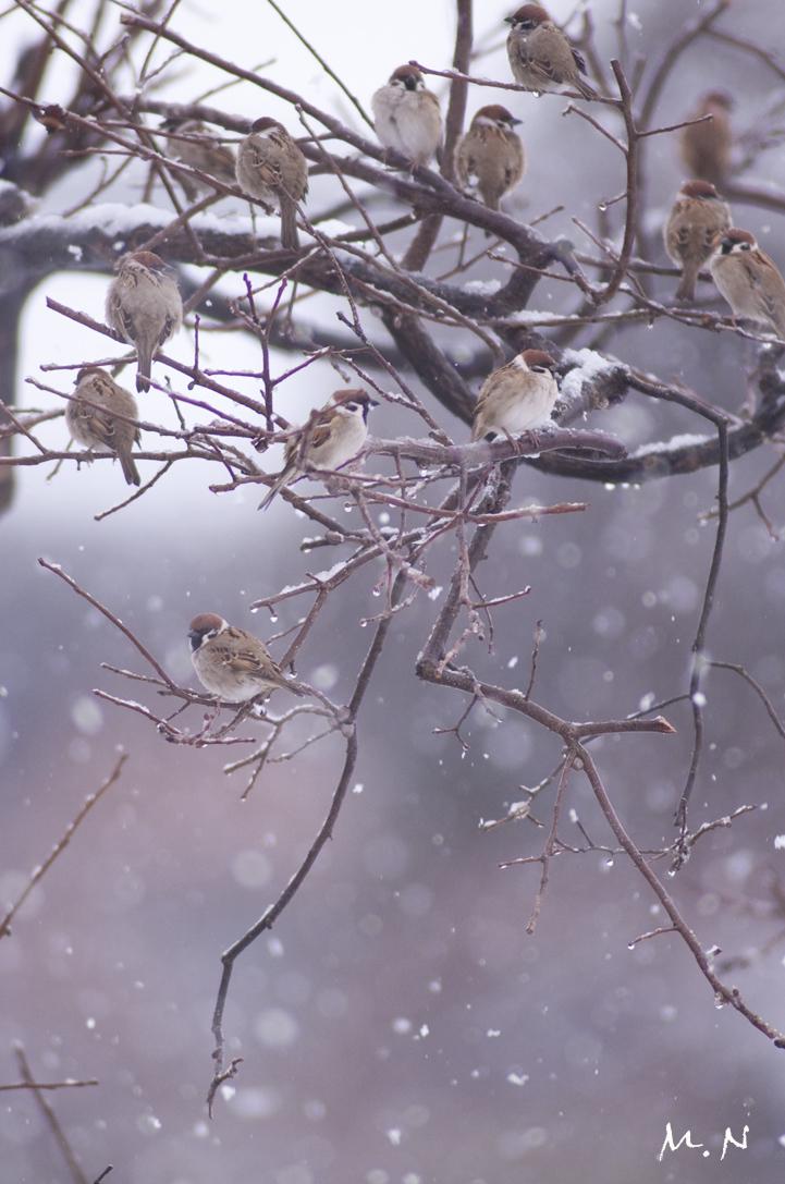 sparrow_002.jpg