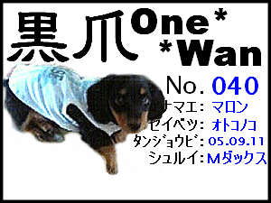 20060211235246.png