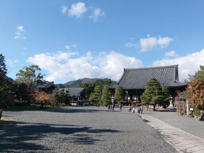 syakado-1.jpg
