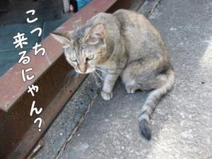 image08212.jpg