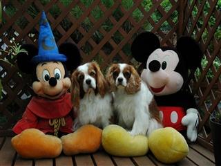 Mickey①