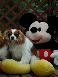 Mickey③