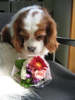 お誕生日のお花①