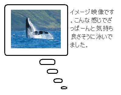 san12.jpg