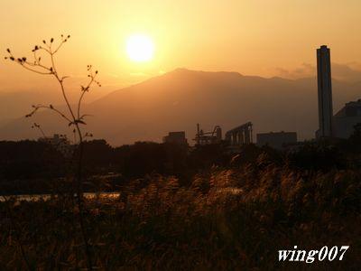 県立相模三川公園081004 051s1