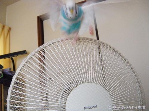 扇風機ネット