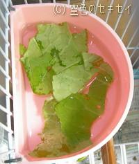 水に野菜を入れました
