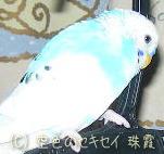(´・ω・`) ショボーン (´・ω・`) ショボーン
