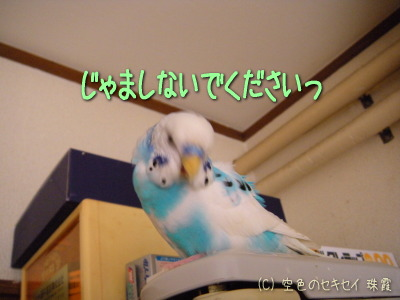ヒィィィッ!!(゚ロ゚ノ)ノ