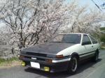桜とAE86