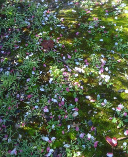FLOWERING PEACH-09