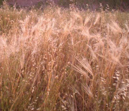 麦の道-03