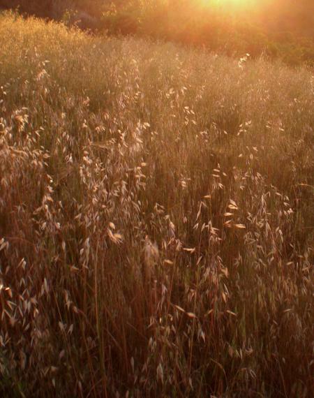 麦の道-06