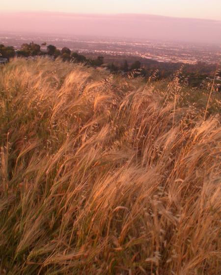 麦の道-07