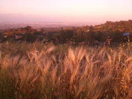 麦の道-09