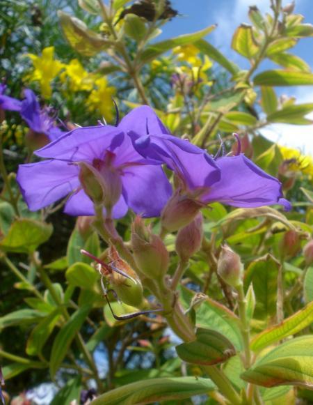 Princess Flower-04