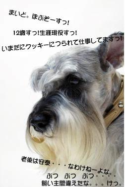 09081201.jpg