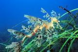 Esperancefish0081.jpg