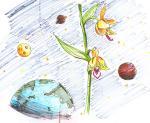 カキラン:宇宙に咲く