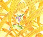 黄:カモメラン
