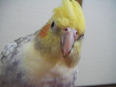bubu_20090129203053.jpg