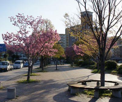 2011花見