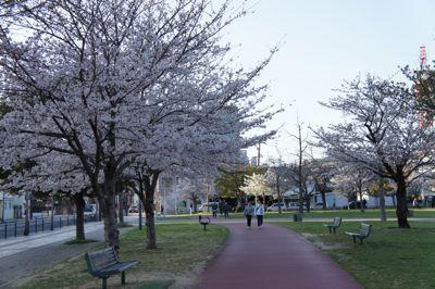 2011花見2