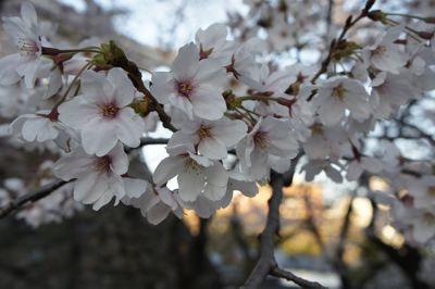 2011花見4