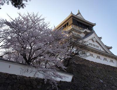 2011花見5