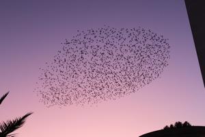 鳥の群れ2