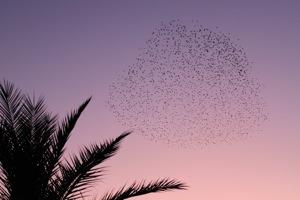 鳥の群れ3