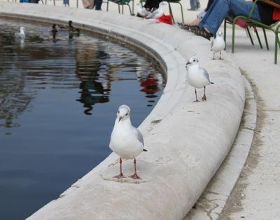 チュイルリー公園 鳥2