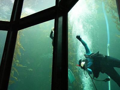 Kelpの大水槽