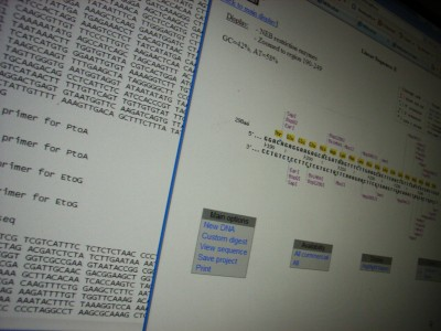 DNA Primer Design