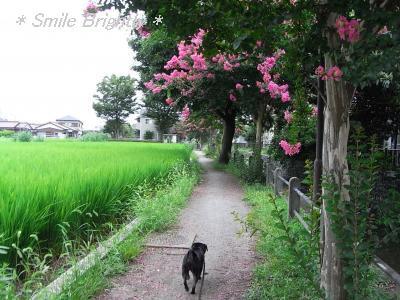 080822お散歩