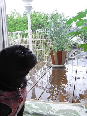 080825ずっと雨です・・・
