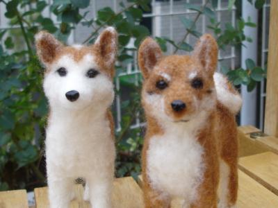 080921柴犬