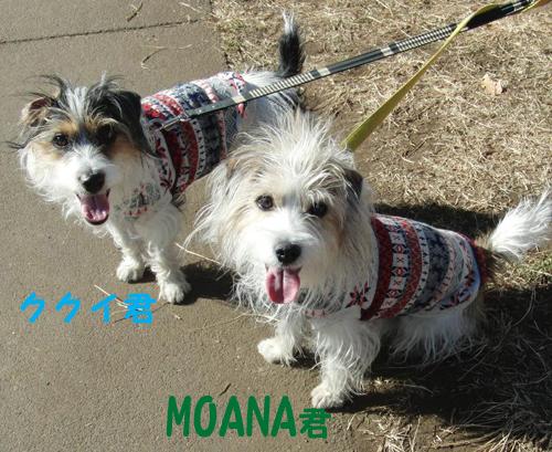 MOANAとククイ_1jpg
