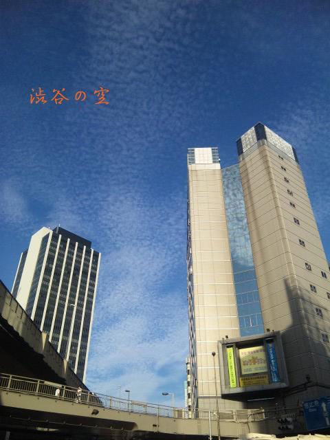 SH380304_1.jpg