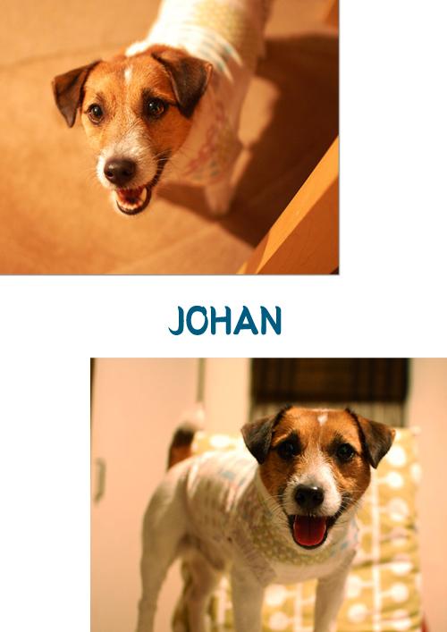 johan-5.jpg