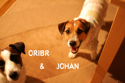orijoha_1_edited-11.jpg